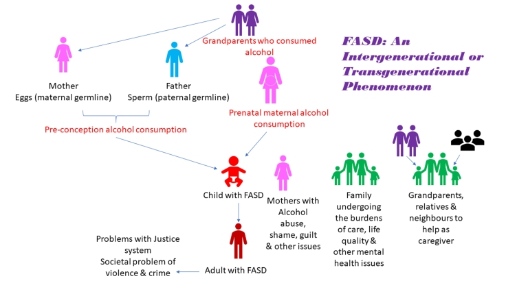 FASD An Intergenerational or Transgenerational Phenomenon